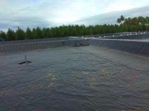 Beli Geomembrane 2020 Cirebon